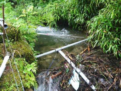 米作りの挑戦(2020) 田植えから1ヶ月が過ぎましたが、大雨で大ピンチです!_a0254656_17410959.jpg