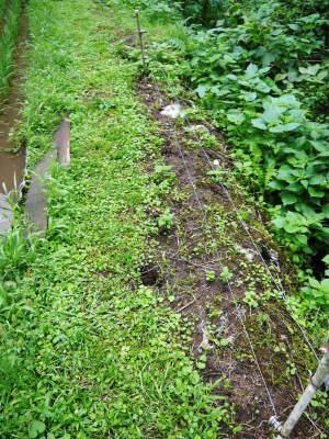 米作りの挑戦(2020) 田植えから1ヶ月が過ぎましたが、大雨で大ピンチです!_a0254656_17475737.jpg