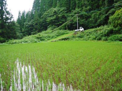 米作りの挑戦(2020) 田植えから1ヶ月が過ぎましたが、大雨で大ピンチです!_a0254656_18004121.jpg