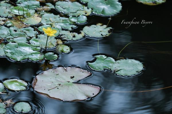 池の写真 **_d0344864_20592258.jpg