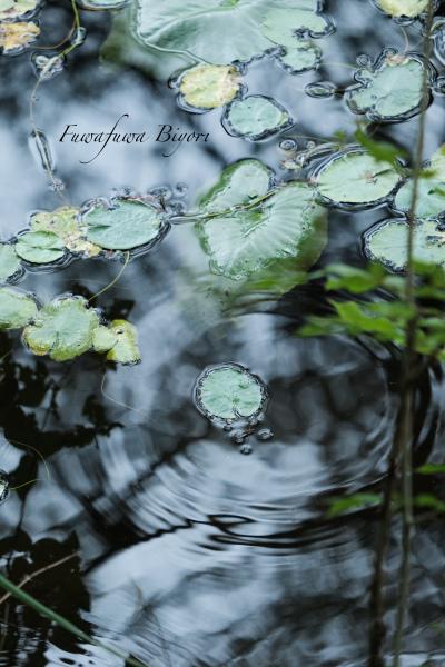 池の写真 **_d0344864_20595236.jpg