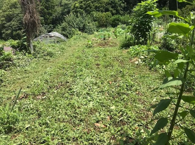 梅雨の晴れ間、汗だくで畑道の草刈り7・12_c0014967_06242948.jpg