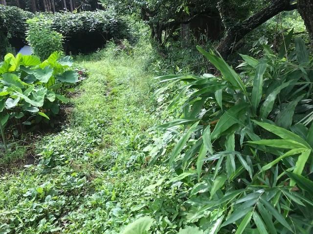 梅雨の晴れ間、汗だくで畑道の草刈り7・12_c0014967_06245255.jpg