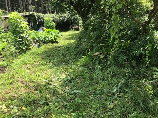 梅雨の晴れ間、汗だくで畑道の草刈り7・12_c0014967_06252012.jpg