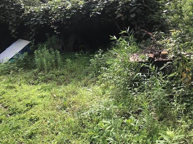 梅雨の晴れ間、汗だくで畑道の草刈り7・12_c0014967_06253933.jpg