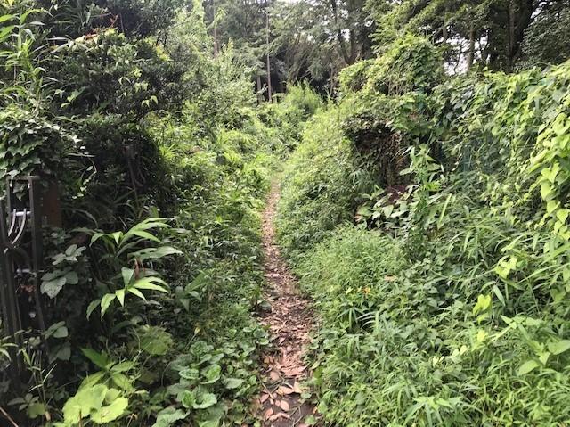 畑道に続き畑の前の赤道沿いの下草刈り7・13_c0014967_16461670.jpg