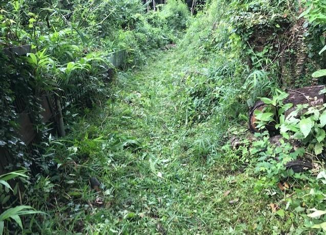 畑道に続き畑の前の赤道沿いの下草刈り7・13_c0014967_16472110.jpg