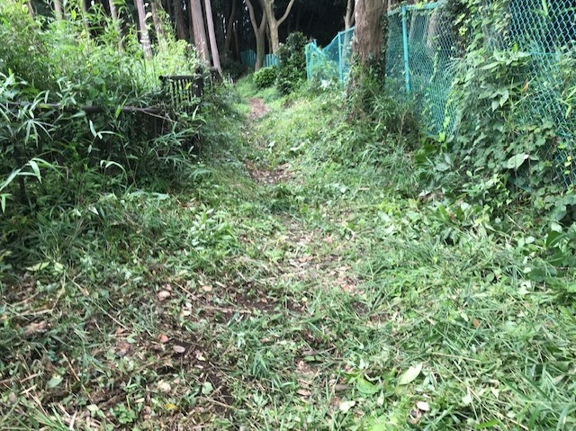 畑道に続き畑の前の赤道沿いの下草刈り7・13_c0014967_16474218.jpg