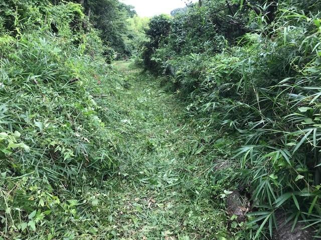 畑道に続き畑の前の赤道沿いの下草刈り7・13_c0014967_16481246.jpg