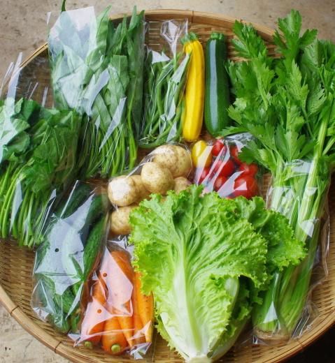 今週の野菜セット(7/14~7/18着)_c0110869_15133346.jpg