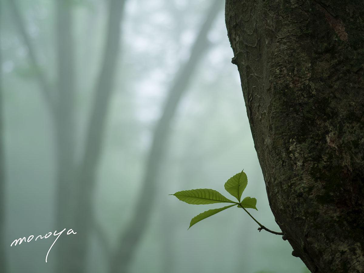 霧のブナ林_c0085877_04541477.jpg