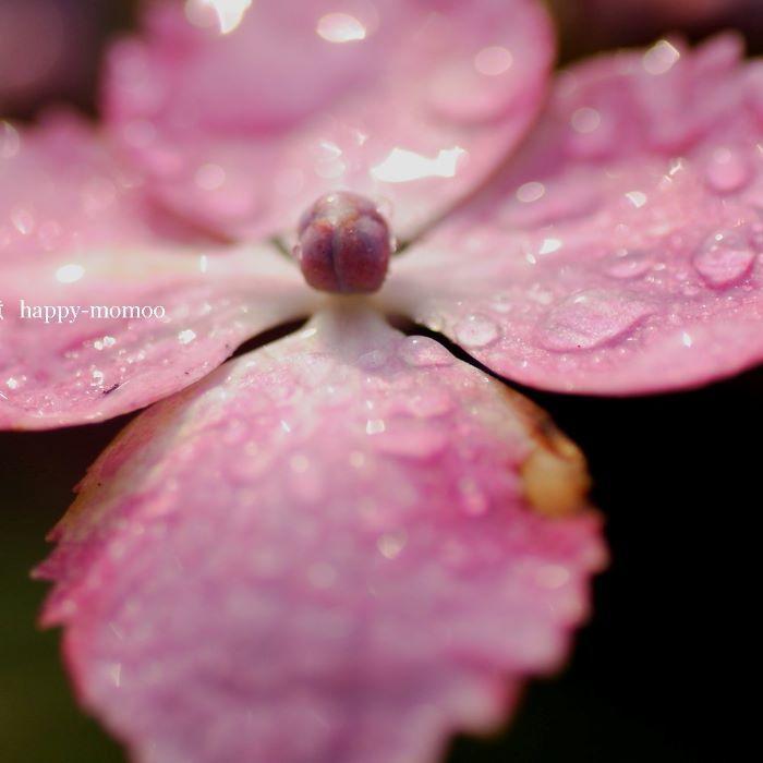 雨はいらないから・・・_c0357781_09090014.jpg