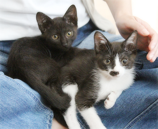 子猫たちのおしらせ_a0389088_09311929.jpg