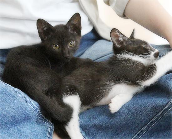 子猫たちのおしらせ_a0389088_09311988.jpg