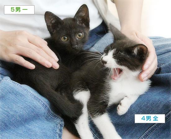 子猫たちのおしらせ_a0389088_09312012.jpg