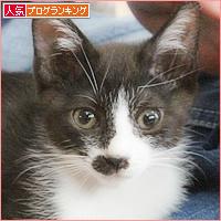 子猫たちのおしらせ_a0389088_09312015.jpg