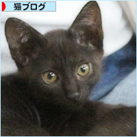 子猫たちのおしらせ_a0389088_09312026.jpg