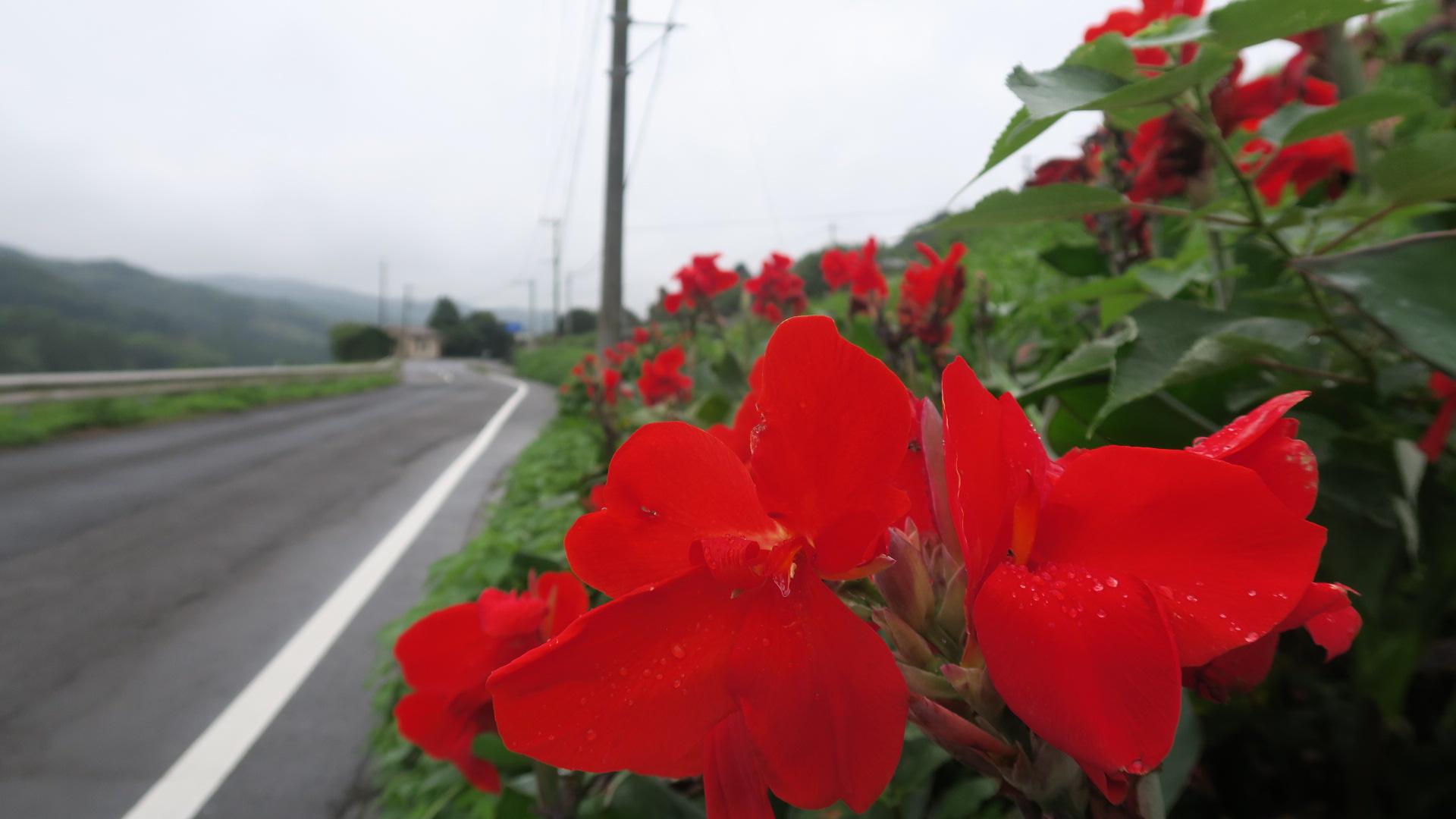 国東半島峯道ロングトレイルT2 2020.07.12(日)_a0166196_1645230.jpg