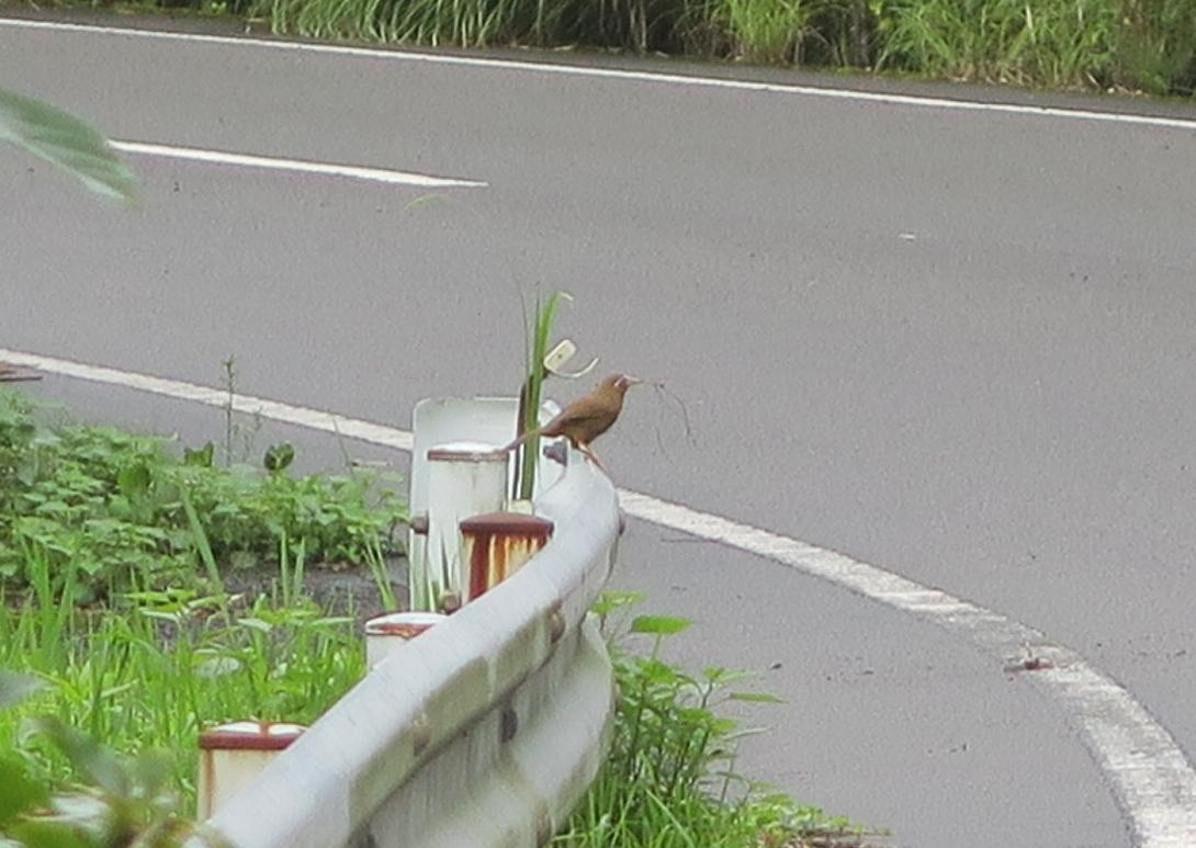国東半島峯道ロングトレイルT2 2020.07.12(日)_a0166196_168912.jpg