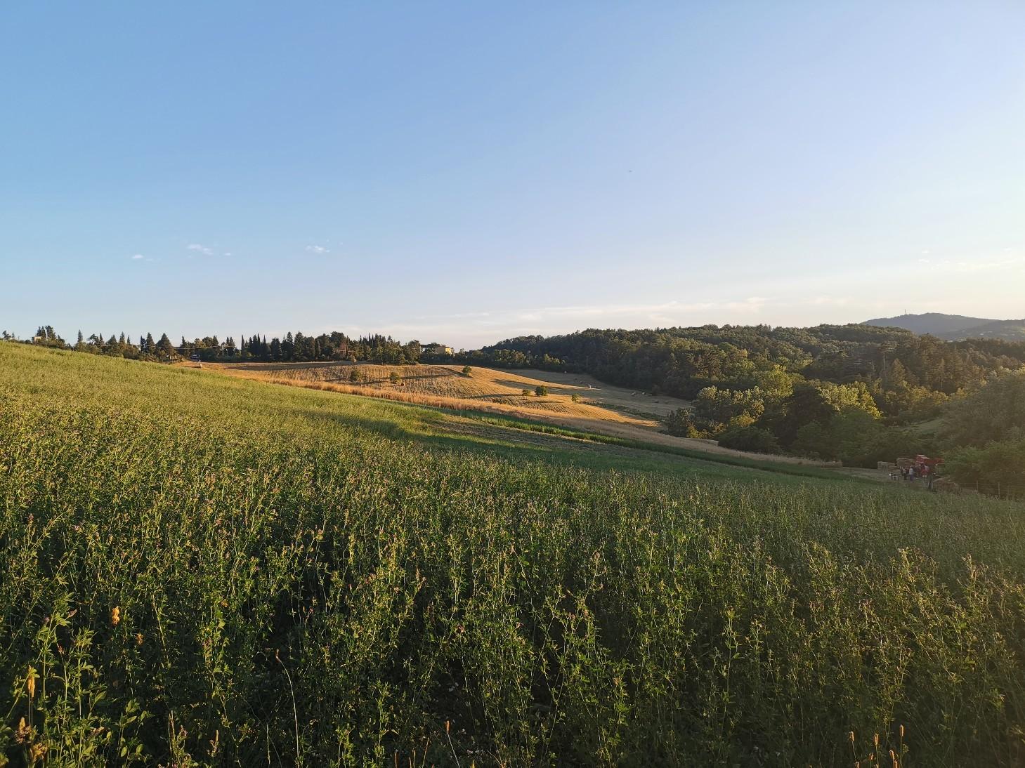 小麦の季節です_f0106597_06295495.jpg
