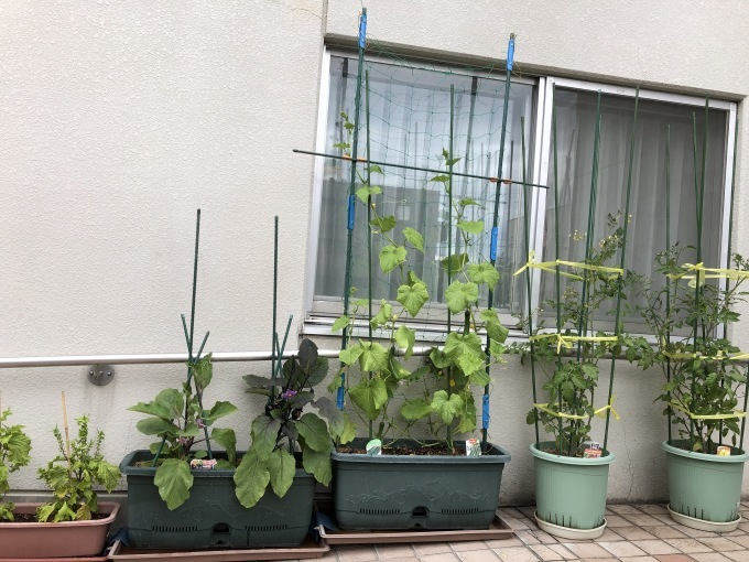 新鮮お野菜_b0159098_16410382.jpg