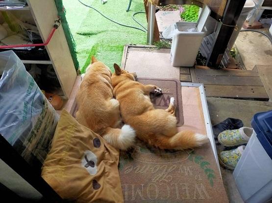あいつ今何してる?(卒業犬猫たち)_f0242002_06350929.jpg