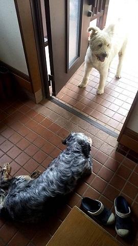 あいつ今何してる?(卒業犬猫たち)_f0242002_06361885.jpg