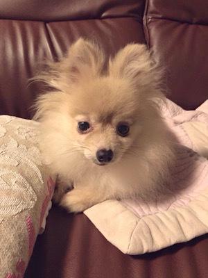 保護犬「ひらり」その後_f0249610_12150209.jpeg