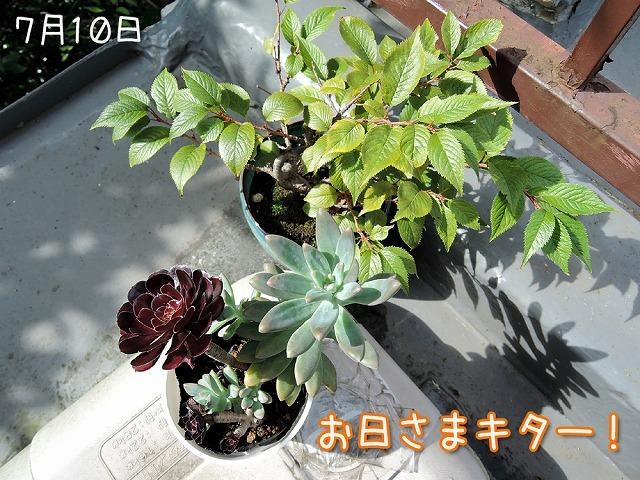 植物ちゃんず_c0062832_16075911.jpg