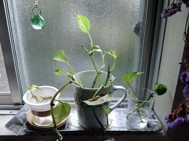 植物ちゃんず_c0062832_16173792.jpg