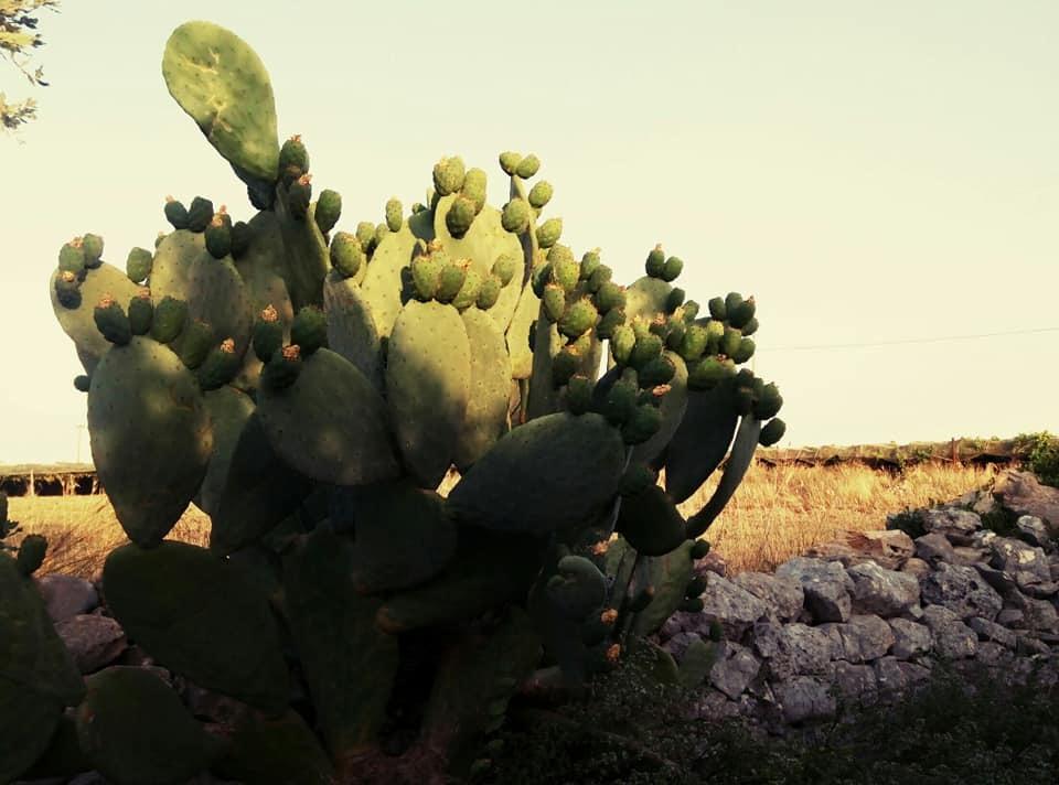 現在のプーリアの自然をお届け_b0305039_00224493.jpg
