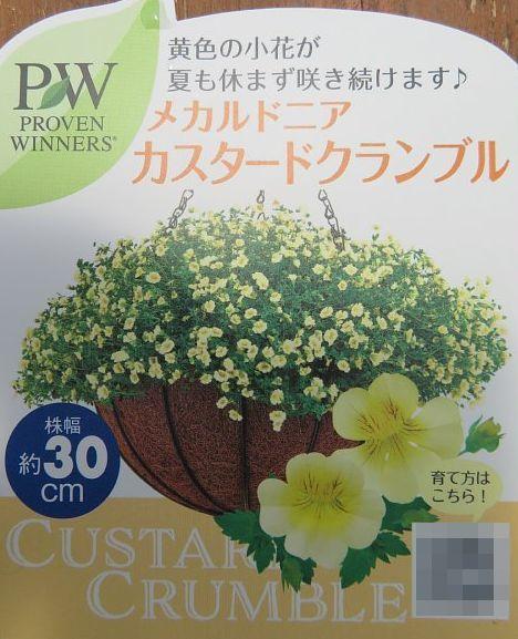 2020年7月28日 壁掛けプランターの花  !(^^)!_b0341140_18282435.jpg