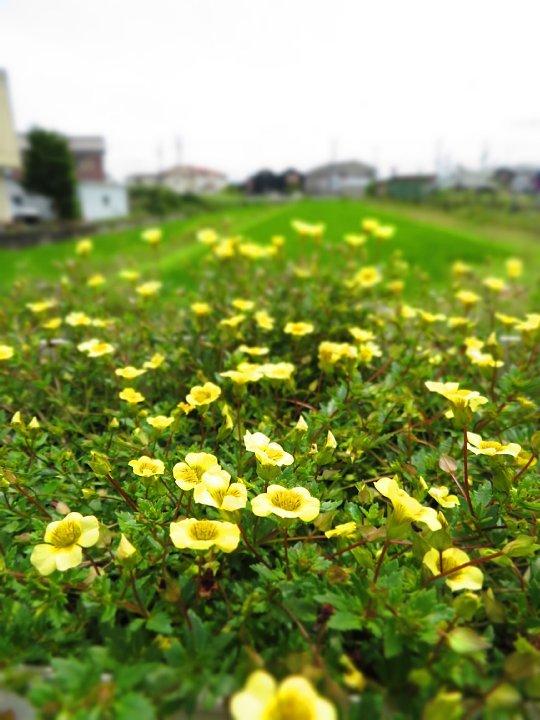 2020年7月28日 壁掛けプランターの花  !(^^)!_b0341140_18285370.jpg