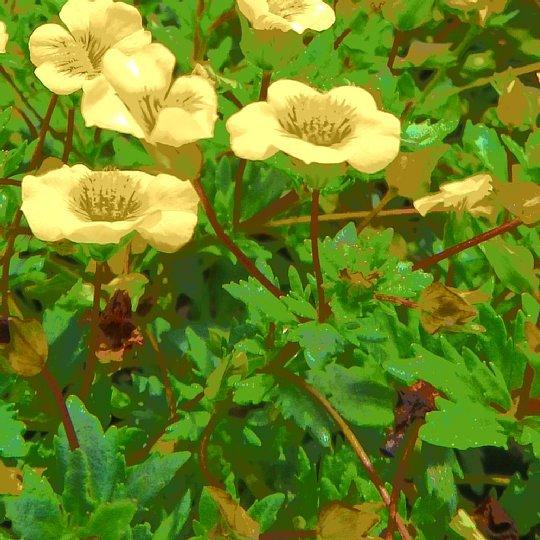 2020年7月28日 壁掛けプランターの花  !(^^)!_b0341140_18291021.jpg