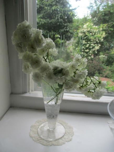 好きな小花のばら、アルバメディランドとレッドキャスケード_a0279743_13035988.jpg