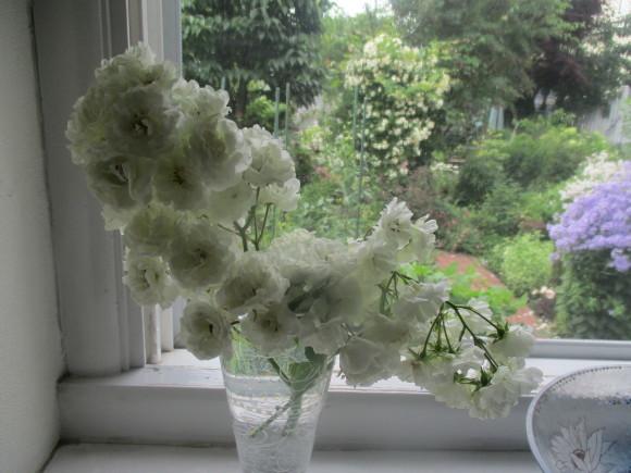 好きな小花のばら、アルバメディランドとレッドキャスケード_a0279743_13041467.jpg