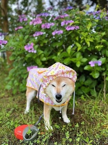 雨、雨、降れ降れ、もっと降れ~♪_b0314043_07433586.jpg