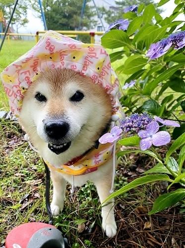 雨、雨、降れ降れ、もっと降れ~♪_b0314043_07441783.jpg