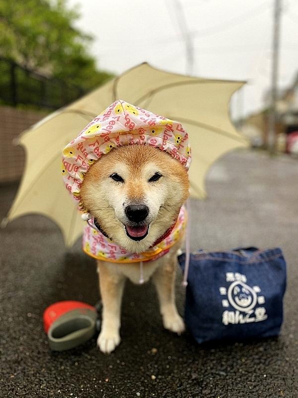 雨はいつまで降り続く_b0314043_08060428.jpg