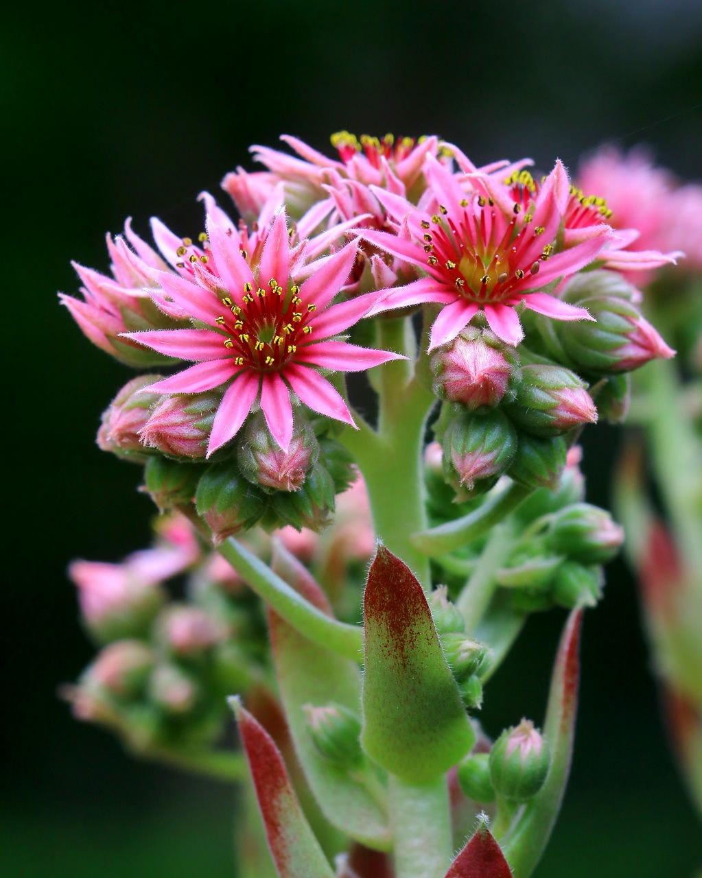 梅雨さ中 またまたレイクガーデンで花や虫_c0305565_17505972.jpg