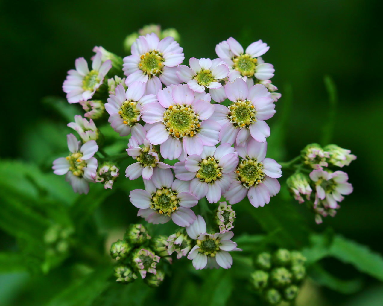 梅雨さ中 またまたレイクガーデンで花や虫_c0305565_17522956.jpg