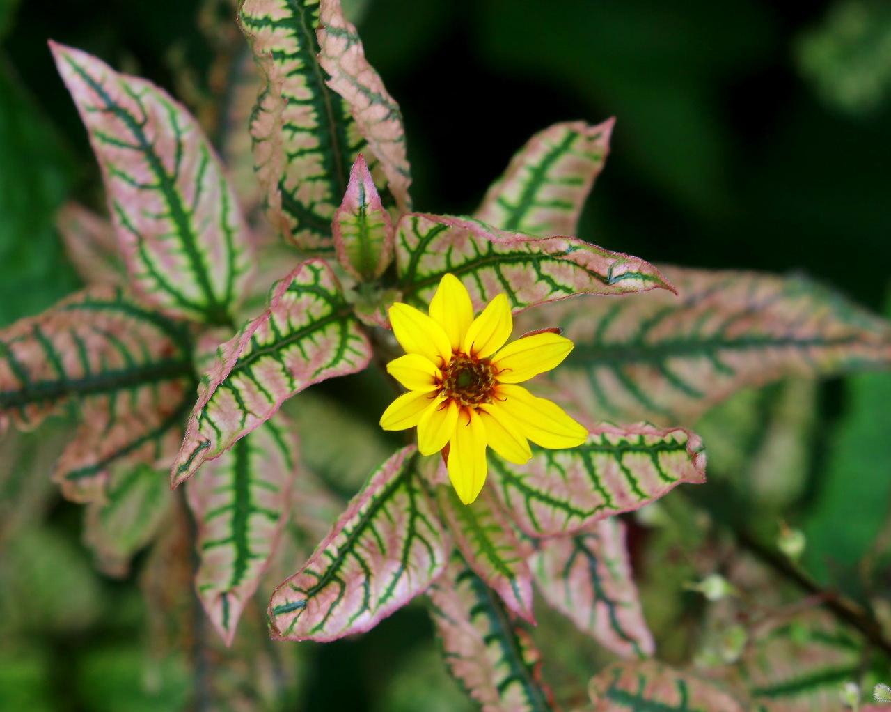 梅雨さ中 またまたレイクガーデンで花や虫_c0305565_17525630.jpg