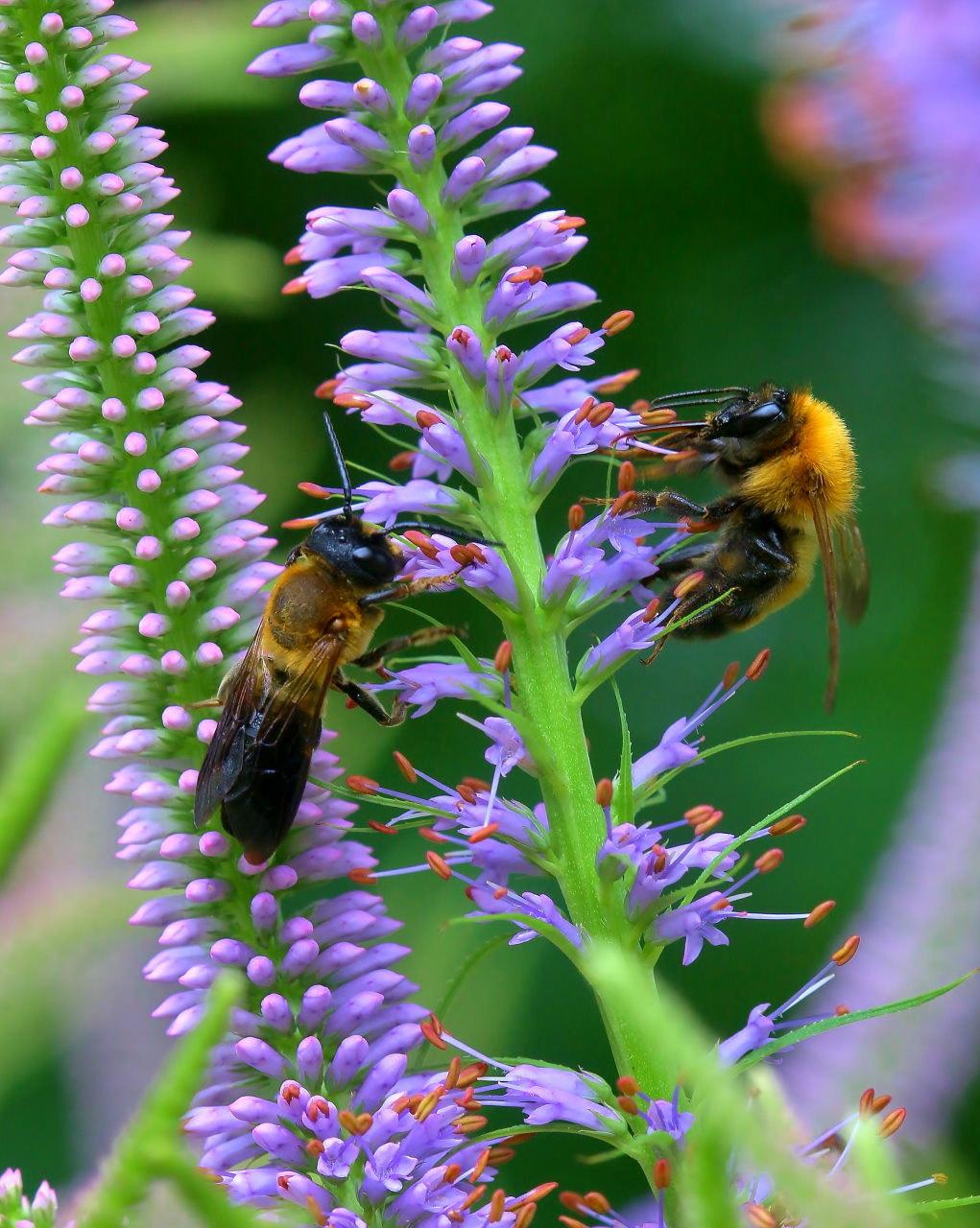 梅雨さ中 またまたレイクガーデンで花や虫_c0305565_17585309.jpg