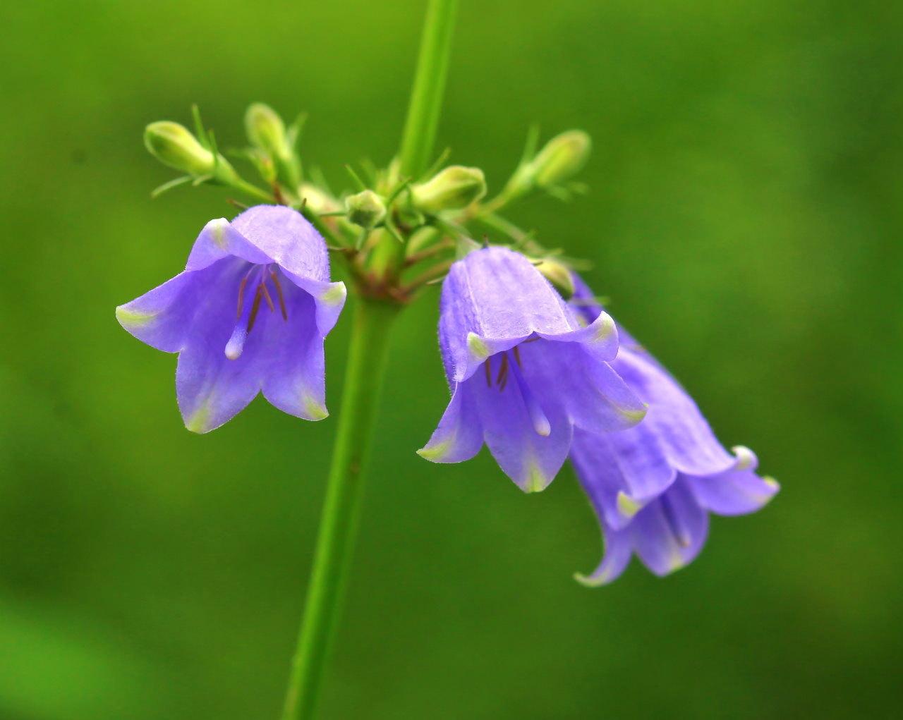 梅雨さ中 またまたレイクガーデンで花や虫_c0305565_17590871.jpg
