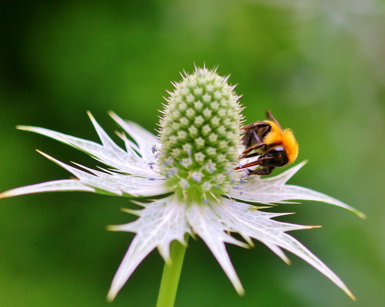 梅雨さ中 またまたレイクガーデンで花や虫_c0305565_17595373.jpg