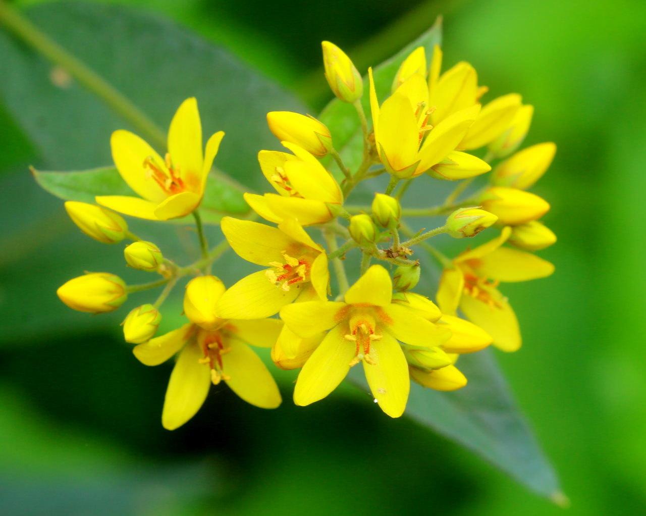 梅雨さ中 またまたレイクガーデンで花や虫_c0305565_18002283.jpg