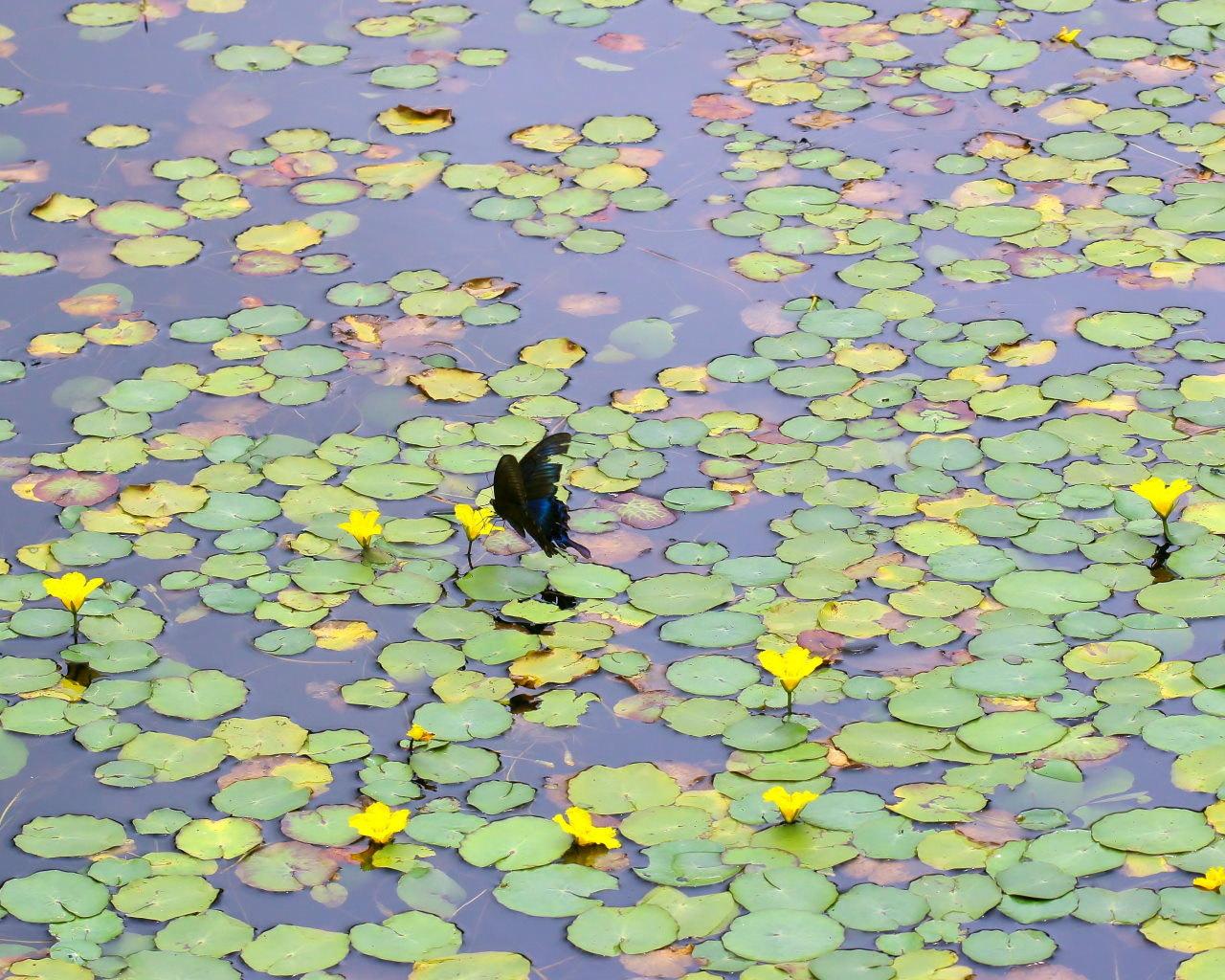 梅雨さ中 またまたレイクガーデンで花や虫_c0305565_18003986.jpg