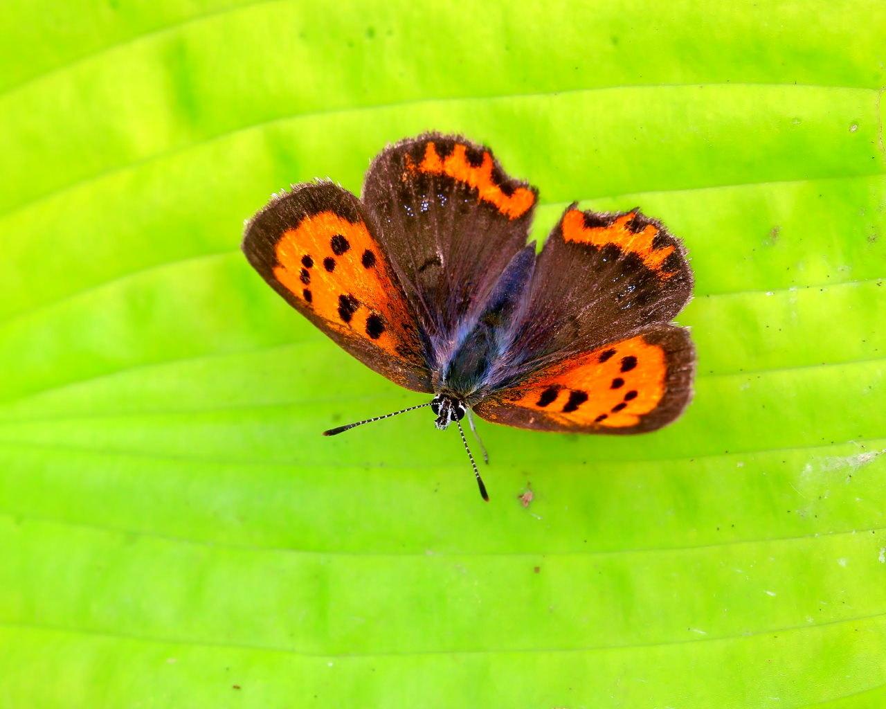 梅雨さ中 またまたレイクガーデンで花や虫_c0305565_18005887.jpg