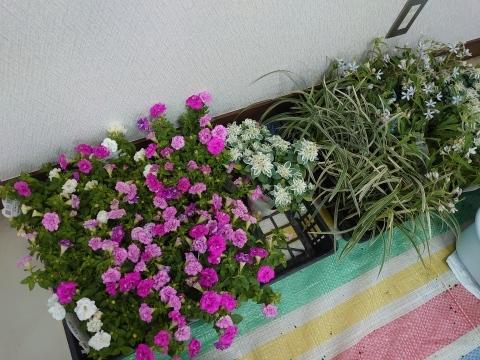 初夏の寄せ植え教室_b0187894_21301986.jpg