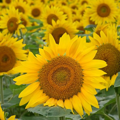夏の花 03_f0099102_15230821.jpg